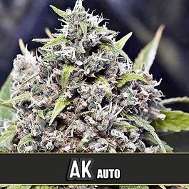 AK Auto 3+1