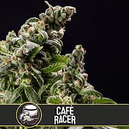 Café Racer x3
