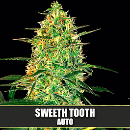 Sweeth Tooth Auto 3+1