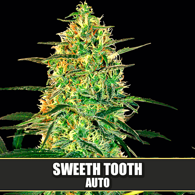 Sweeth Tooth Auto x3
