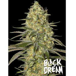 Black dream 3+1