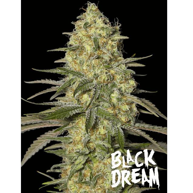 Black dream x3