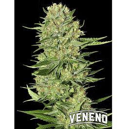 Veneno x3