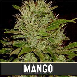 Mango x3