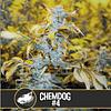 Chemdog #4 x3