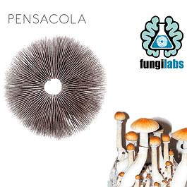 Pensacola Espora