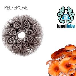 Red spore Espora