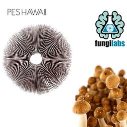 PES Hawaii Espora