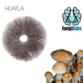 Huatla Espora