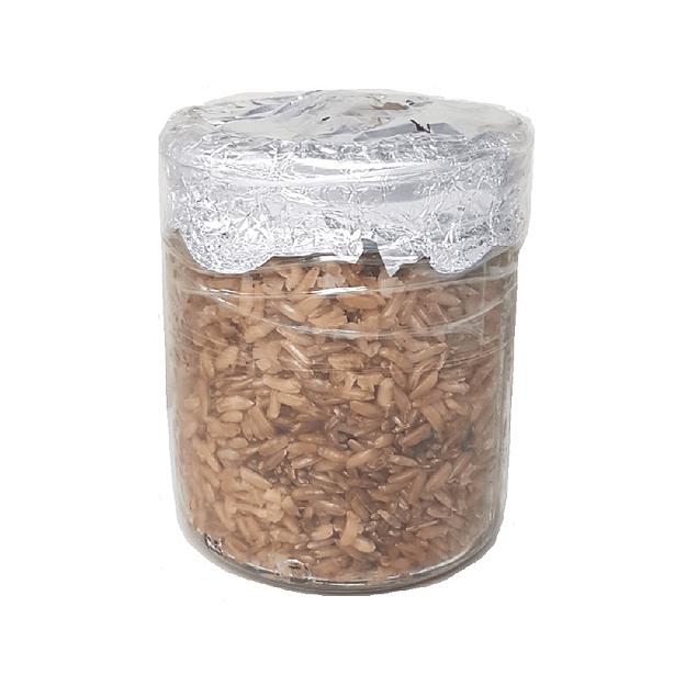 Mushjar 500cc grano integral estéril