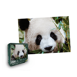 Rompecabezas x 1000 Piezas Lata Oso Panda