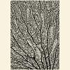 Lámina Abstracto 1