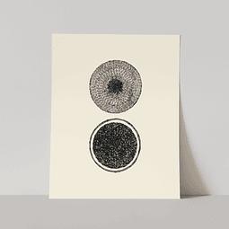 Lámina Abstracto 2