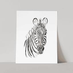 Lámina Zebra