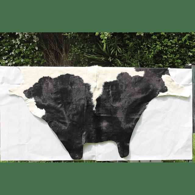 Cuero de vaca muy curtida  curtida en Argentina en diferentes colores