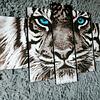 Tigre Ojos azules 1 metro 10 de ancho x 70 de alto