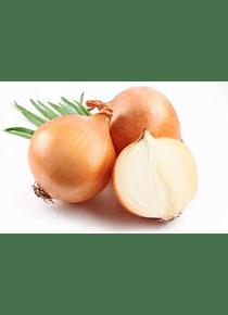 Cebollas Blanca 20 Unidades