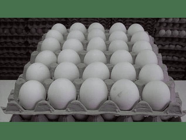 Huevos Blancos (Primera Categoría)