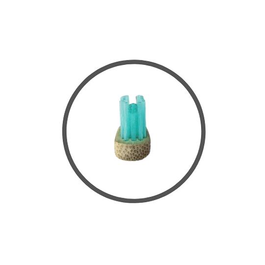 Cepillo Ortodoncia Menta