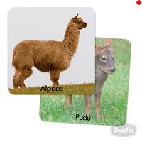 Memorice Fauna chilena