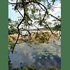 Libro LITLG - Summer Mists, River Swim