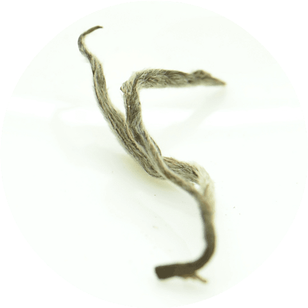 Darjeeling Namring Romance FTGFOP1 - Primera Cosecha