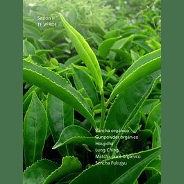 #Todosobreelte Sesión 2: Té verde