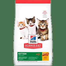 Hills Kitten
