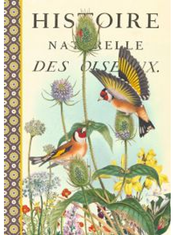 Cahier imagier Oiseaux d'Europe
