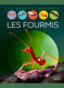 La Grande Imagerie - Les fourmis