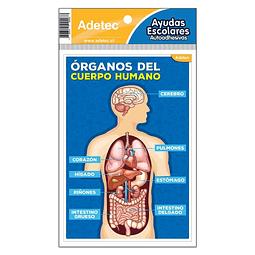 Etiqueta Órganos Del Cuerpo Humano Autoadhesiva Adetec