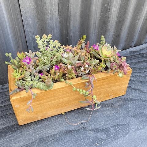 Jardinera de madera 30 cm largo con suculentas