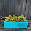 Jardinera 30 cm color turquesa con suculentas