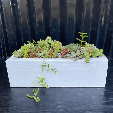 Jardinera blanca 30 cm con suculentas