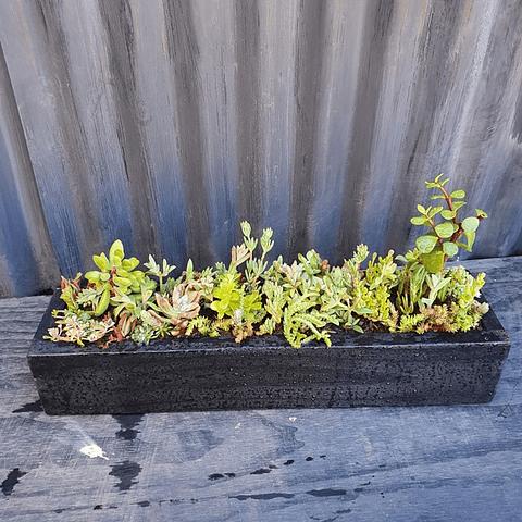 Jardinera negra 50 cm de largo con suculentas