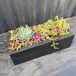 Jardiner negra 30 cm de largo con suculentas_2