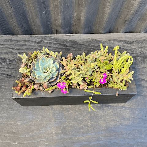 Jardinera negra 30 cm de largo con suculentas_2