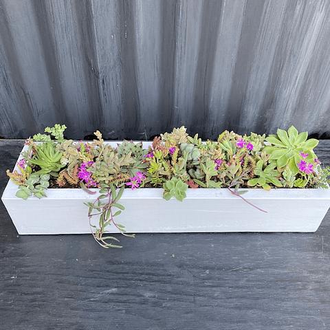 Jardinera blanca 50 cm largo con suculentas