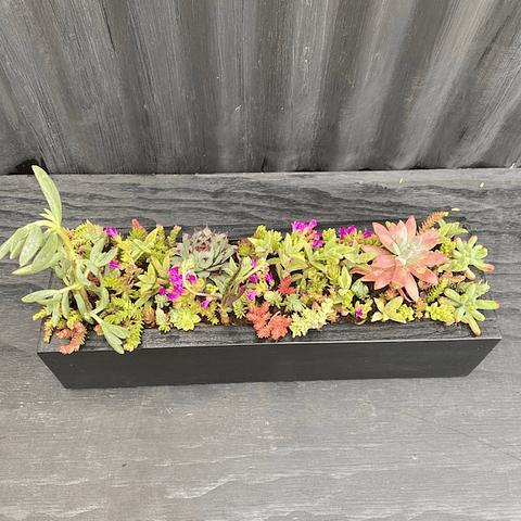 Jardinera negra 40 cm largo con suculentas