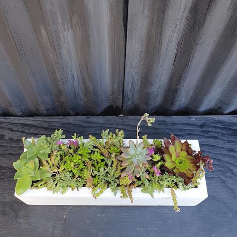 Jardinera blanca 40 cm largo con suculentas