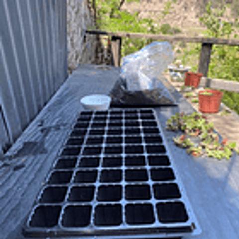 Kit para plantacion de 50 esquejes con Bandeja