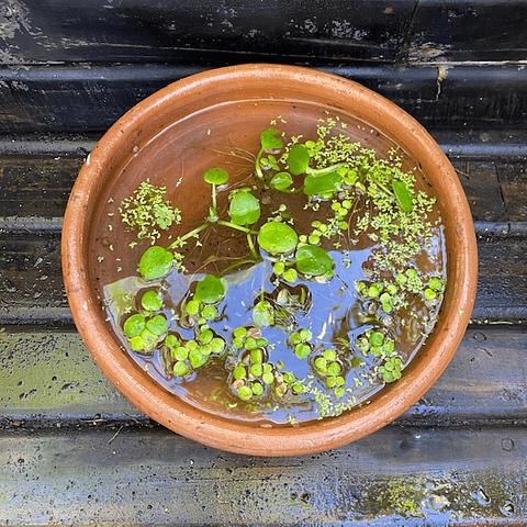 Macetero de greda con plantas acuáticas