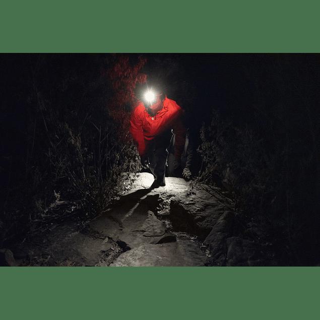 12231     bandicoot - indigo