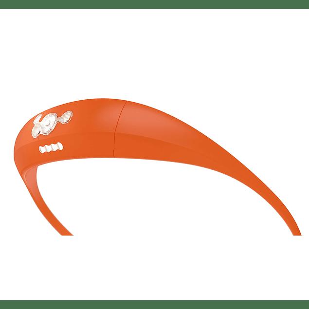 12234     bandicoot - orange