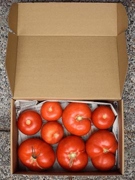 Caja 2 Kg Tomates Larga Vida Orgánicos