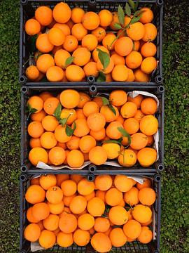 Bolsa 1 Kg Naranjas