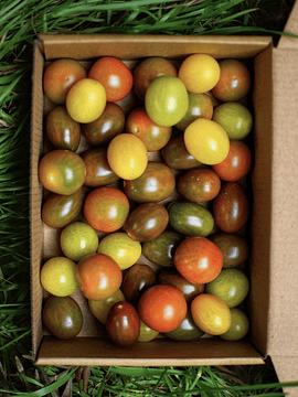 Caja 500 Grs Tomates Cherry Mix