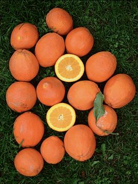Bolsa 2 Kg Naranjas
