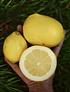 Bolsa 2 Kg Limones