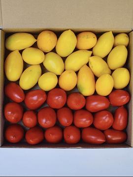 Caja 3,5 Kg Tomates Pera Mix